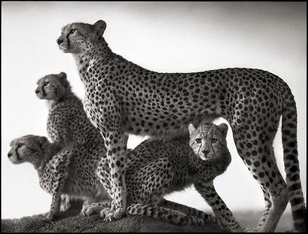 Nick Brandt, 'Cheetah & Cubs, Maasai Mara', 2003