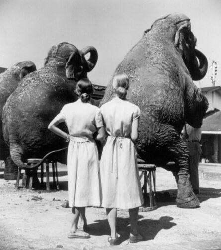 Louise Dahl-Wolfe, 'Twins with Elephants, Sarasota', 1947