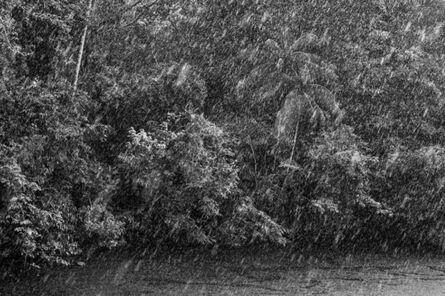 Sebastião Salgado, 'Rain in an igapó, a type of forest frequently flooded by river water. At center, an açaí-solteiro or açaí-do-Amazonas palm tree (Euterpe precatoria). Jaú River, Jaú National Park, state of Amazonas', 2019 [printed on request]