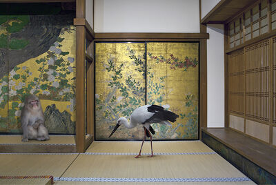 Karen Knorr, 'Cultivating Happiness, Chishaku-in Temple, Kyoto  ', 2015