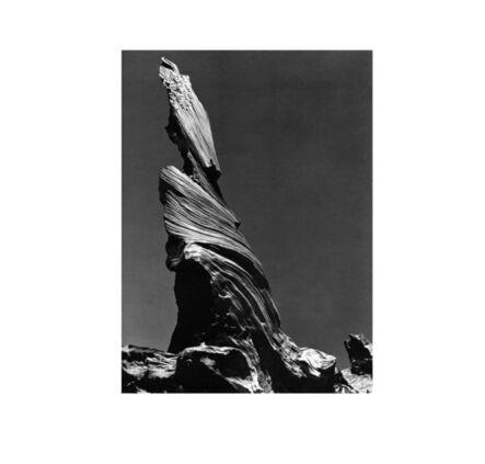 Edward Weston, 'Driftwood Stump', 1937