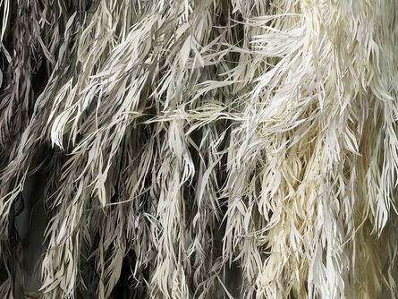 Shirley Wegner, 'Eucalyptus (overexposure)', 2019