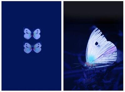 Robert Zhao Renhui, 'Butterflies in UV, Male/Female - Diptych'
