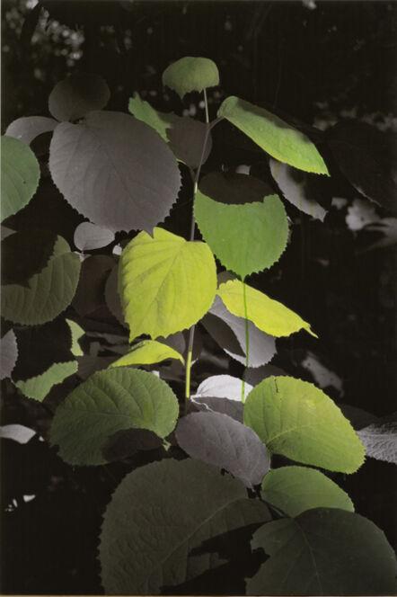 Honggoo Kang, 'Study of Green - Wide Leaf', 2012