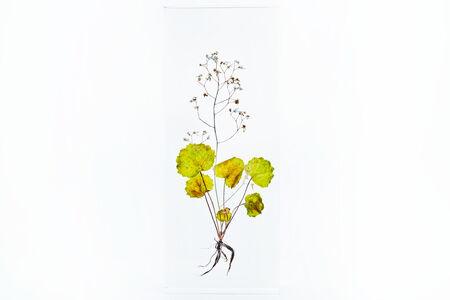 Azuma Makoto, 'Block Flower One, Saxifraga stolonifera', 2018