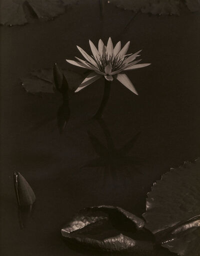 Charles Sheeler, 'The Lily, Mount Kisco', 1918-1919