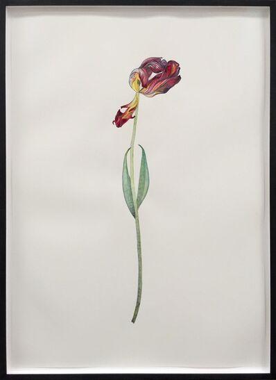 Marc Bauer, 'Tulip Orange and Red', 2015