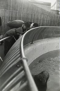 Garry Winogrand, 'Untitled, from the Animals Series', 1964