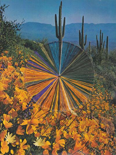 Natalie Ciccoricco, 'Field Trip', 2020
