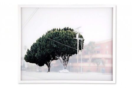 Yoko Kanayama, 'ficus #6 [w. temple st. at n. vendome st.]', 2009
