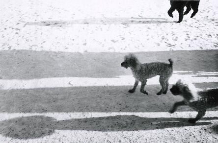 Walter Schels, 'Dog #4', 1979