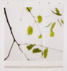 Jeri Eisenberg, 'Quaking Ash, No.3', 2008
