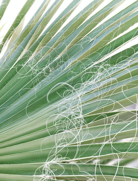 Andreas Gefeller, '015 (Palm Leaves), from The Other Side of Light', 2017