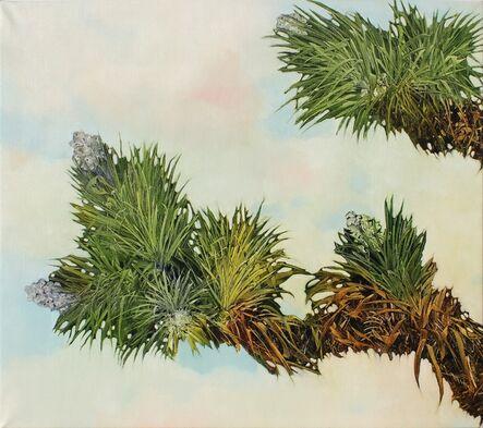 Robert Dunahay, 'Joshua Tree Branches', 2012