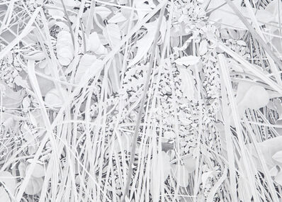 Bill Richards, 'Reeds and Ferns', 2013