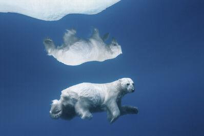 Paul Nicklen, 'Polar Reflections', 2006