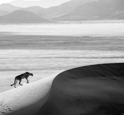 David Yarrow, 'Prowl', 2013
