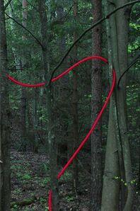 Susan Rankaitis, 'Red Line Drawing', 2005/2006