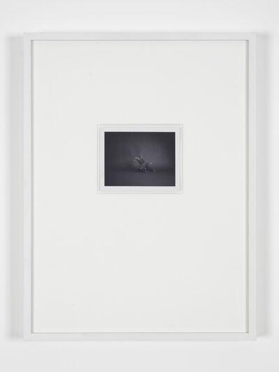 Becky Beasley, 'Polaroids (SX-70) (plastic Fern)', 2001