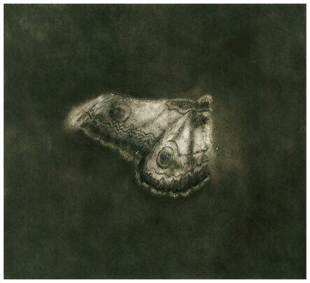 Dror Ben-Ami, 'Butterfly 1', 2014