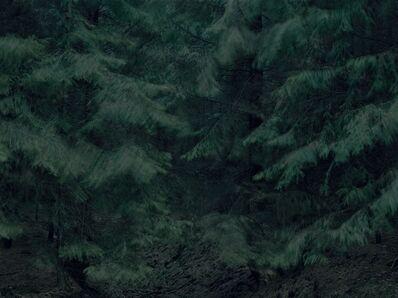 Michael Lange, 'WALD   Landscapes of Memory#5971', 2011