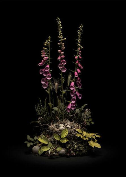 Jasper Goodall, 'Dark Flora #5 - May Foxgloves', 2020