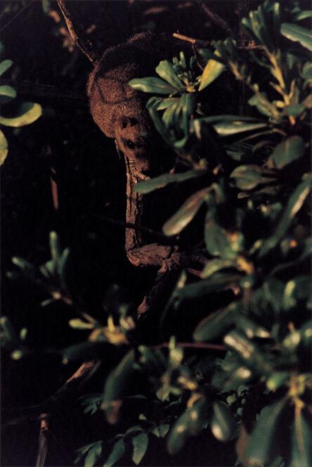 Takuma Nakahira, 'Why an illustrated human-animal dictinonary  #04-196', 2004