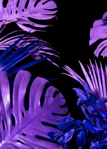 Chloe Newman, 'Terrestrial Flora, from the End of Genesis series', 2014