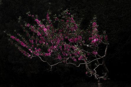 Shen Wei 沈玮 (b. 1977), 'Peach Tree', 2016