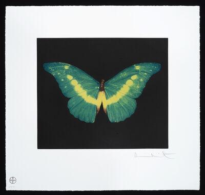Damien Hirst, 'Butterfly – Landscape – To Belie', 2012