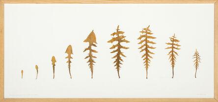 herman de vries, 'alle blätter von einer pflanze, blaue lactuca', 2009