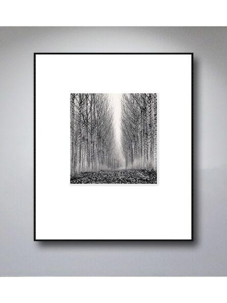 Michael Kenna, 'Corridor of Leaves, Guastalla, Emilia Romagna, Italy. 2006', 2006