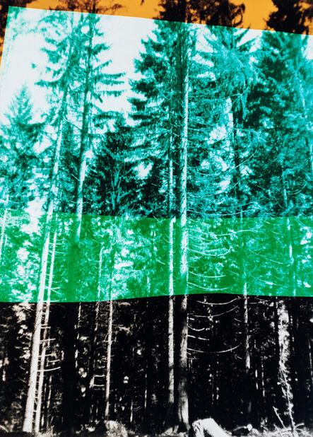 Frank Mädler, 'Wald in vier Farben', 2019