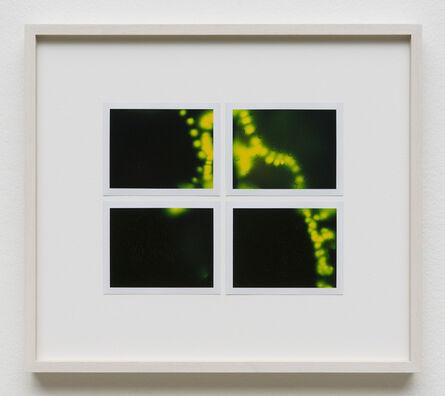 Peter Miller, 'Photuris #27', 2013