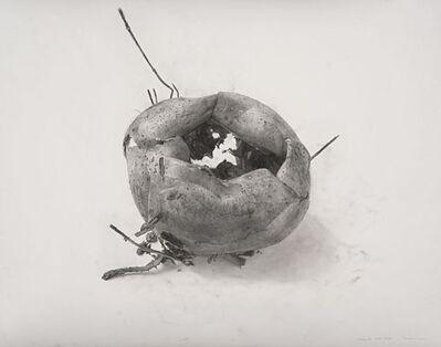 Lee Bae, 'Cheongdo (Kaki séché)', 2000