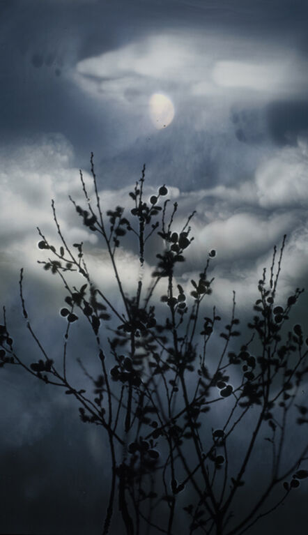 Susan Derges, 'Gibbous Moon Willow', 2012