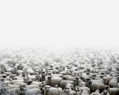Tamas Dezso, 'Sheep Farm (Silvasude Sus, West Romania)', 2012