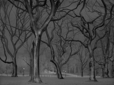 Michael Massaia, 'The Mall, Central Park, New York City', 2013