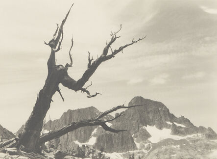 Ansel Adams, 'Banner Peak, Mt. Ritter, Tree', ca. 1929
