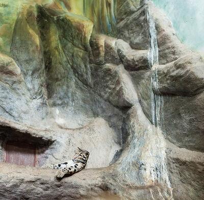 Eric Pillot, 'Nebulous Panther and Cascade', 2012
