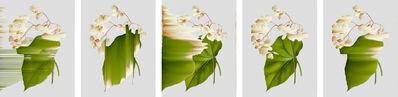 Andrea Wolf, 'Begonia Obliqua, vars. 012, 020, 023, 095, 194', 2020
