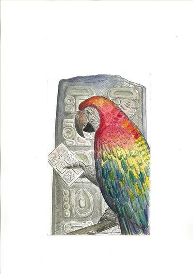 Bjorn Skaarup, 'Scarlet Macaw, Honduras', 2016