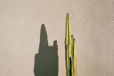 Lorena Lohr, 'Untitled (Cactus and pink wall)', 2013