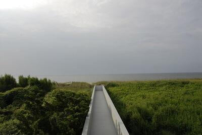 David S. Allee, 'Erika's Walkway (Summer)', 2012