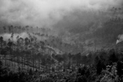 Zulkarnaen Syri Lokesyware, 'Pine forest'