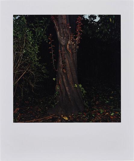 Sarah Jones, 'The Park (Beech) III', 2003