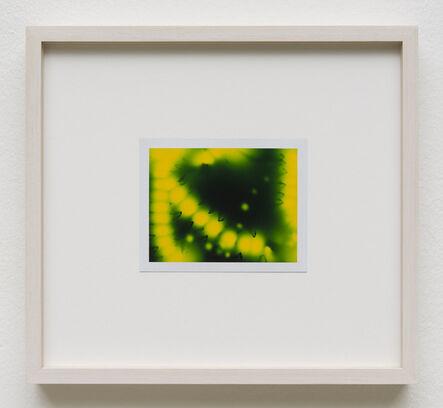 Peter Miller, 'Photuris #1', 2013