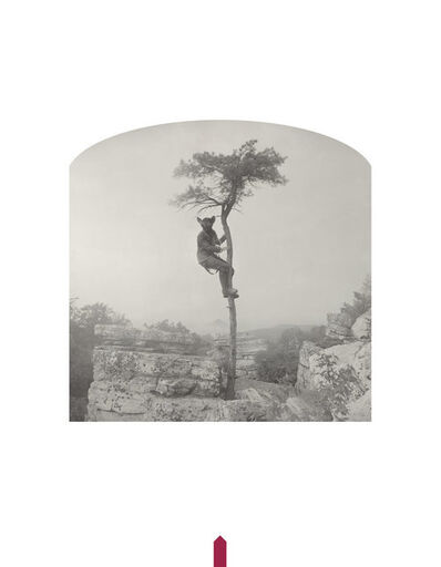 Kahn & Selesnick, 'Bat in a Tree', 2016