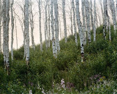 Laura McPhee, 'Summer (Evening)', 2008