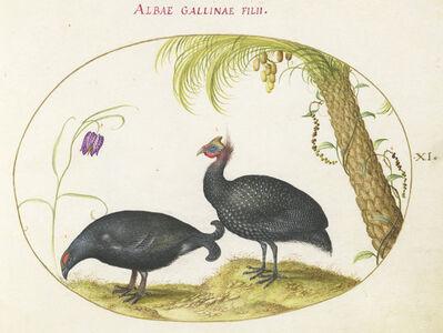 Joris Hoefnagel, 'Animalia Volatilia et Amphibia (Aier): Plate X', ca. 1575/1580